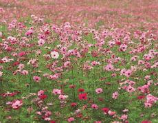 青州花卉苗木