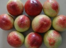 中油5油桃基地陜西油桃價格