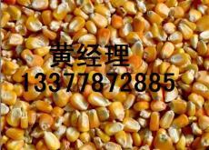 飼料廠求購玉米 高梁 小麥 大豆 大麥