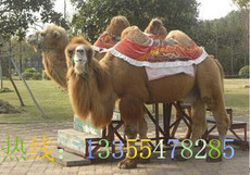 骆驼哪里有养殖场 一头骆驼多少钱