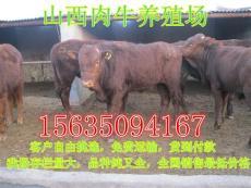 陕西哪里有肉牛养殖场