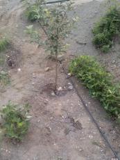 山西果園果樹滴灌管價格