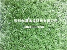 广东球场人造草