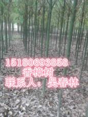 濕地松 池杉 水杉