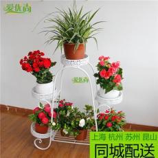 上海室內綠色植物花卉銷售公司